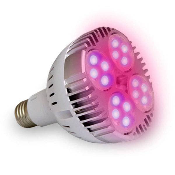 compara Bombillas Led PAR